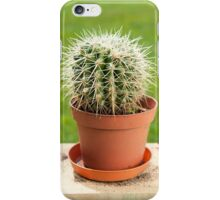 Cactus with big spines in flowerpot  iPhone Case/Skin