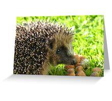 Thank You... You Saved My Life... - Hedgehog - NZ Greeting Card