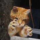 Halloween cat by turniptowers
