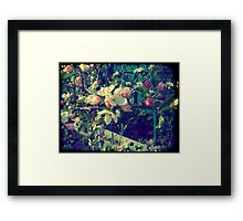 Pink Apple Blossom 3 Framed Print
