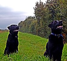 Two Labs Together by mhphotographyuk