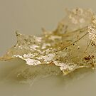 Nature´s old lace by Heather Thorsen