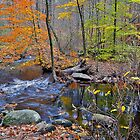A Creek in Norwell. by Peter Doré