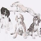 Growing Up Saluki by BarbBarcikKeith