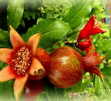 Young Pomegrantes by Charmiene Maxwell-batten