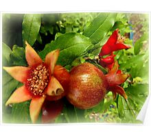 Young Pomegrantes Poster