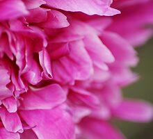 The Flower by amekamura