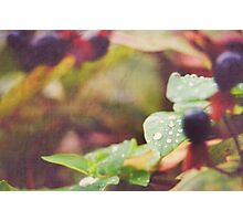 THE COLOURS OF AUTUMN  Photographic Print