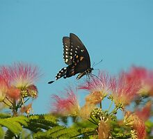 Butterfly Summer Southampton New York by Brennen Cole