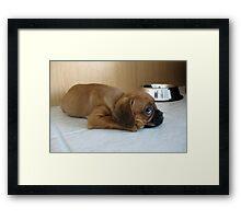 Gus Framed Print