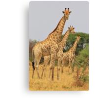 Giraffe Symmetry - African Wildlife Background Canvas Print