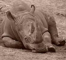 Baby Rhino by Michelle Shoosmith