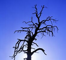 Crazy Tree by DanielRegner