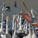 Pelicans Feeding by Mark Snelson