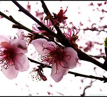 signs of spring by webgrrl