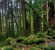 Torc forest by David James