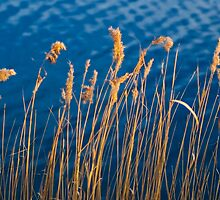 Rushes by Pierre