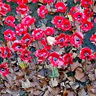 Remembrance Poppies 2014 by Vanessa  Warren