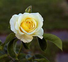 Autumn Roses by Irina777