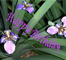 Purple Orchids (Birthday Card) by C J Lewis