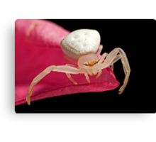 Crab Spider on Frangipani Canvas Print