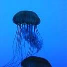 Jellies by Geoffrey Grinton