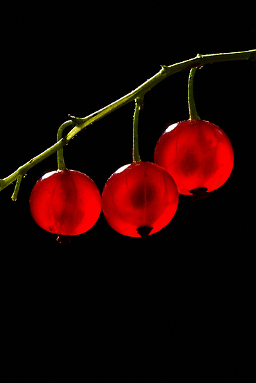 Red Currant Berries by Frank Yuwono