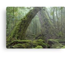 Ancient Rainforest Metal Print