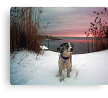 Emma - At Sunset Canvas Print