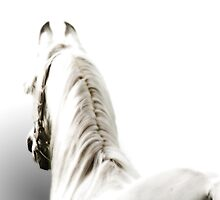 The White Horse by Furtographic
