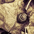 Snail by DavidCucalon