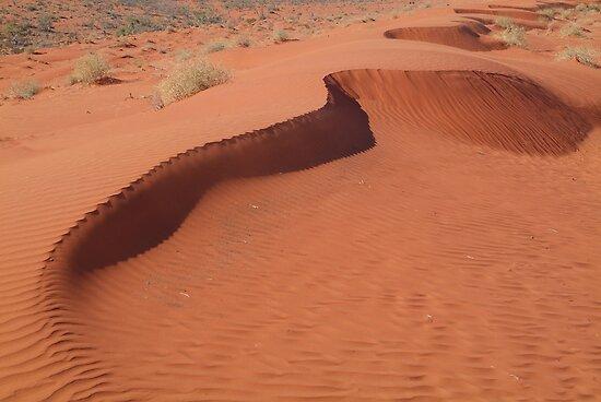 Sandhill,Madigan Line Simpson Desert by Joe Mortelliti