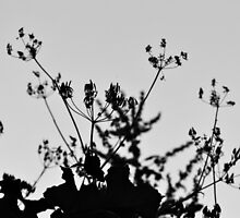 Silhouette of Flowers by Jessica Reilly