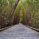 Not the Yellowbrick Road!  by John  Kapusta