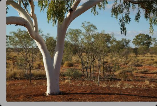 Ghost Gum,Outback Australia,N.T. by Joe Mortelliti