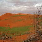 Pending Wild Flowers,North Simpson Desert by Joe Mortelliti