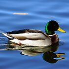 Quack'N Reflection by Loree McComb