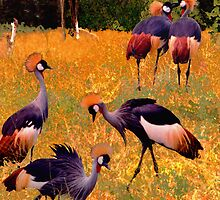 Dance of the Crowned Cranes by ©   Elaine van Dyk