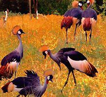 Dance of the Crowned Cranes by ©   Elaine van Dyk
