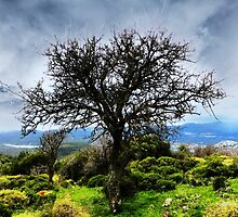 Fruit Tree by aeolia