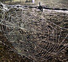 web II by dopey