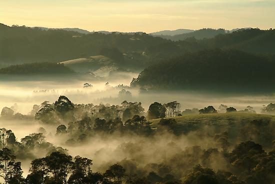 Valley Fog,Dollar, Gippsland by Joe Mortelliti