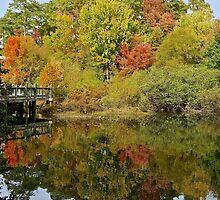 Fall Mirror Image        (1409111748VA) by photroen