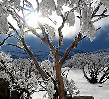 Snowgums 2 by David Sundstrom