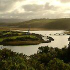 Glen Aire River, Otway Ranges by Joe Mortelliti