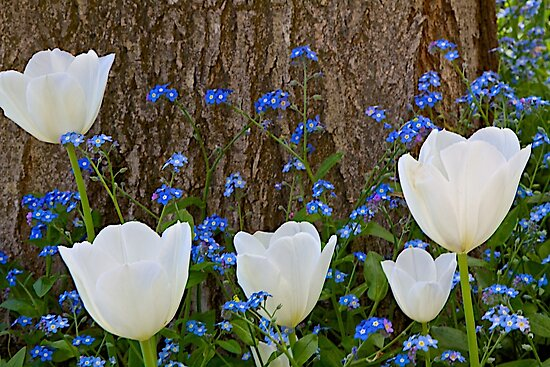 Pure White and Blue by John Butler