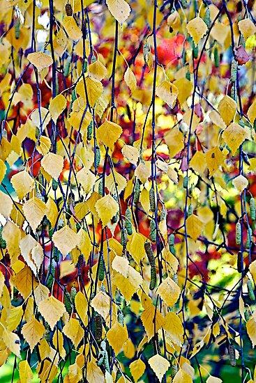Leaf Shower by John Butler