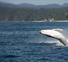 Whale Breech by David  Kembrey