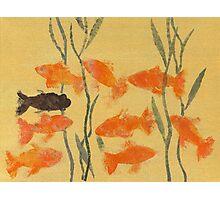 8 Goldfish & 1 Black Photographic Print