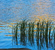 Water, Reeds and Sunset by John Butler